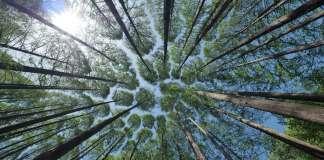cotesa masa forestal