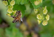 salvar las abejas colmenas inteligentes t-systems