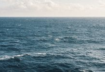 Grace Hopper cable submarino